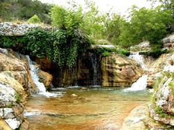 Click to view album: The Springs
